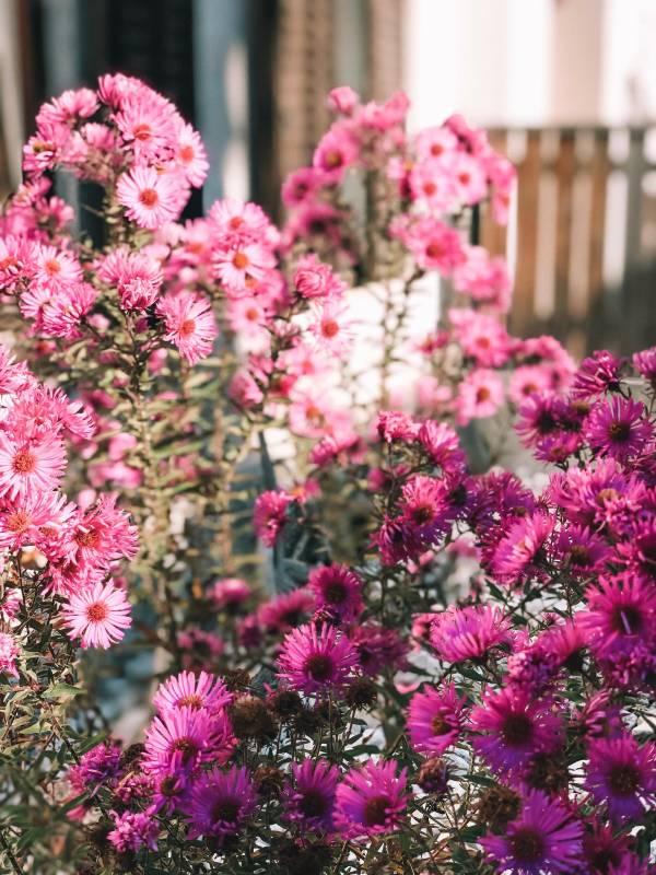 Kranjska Gora - vikend izlet in rožice