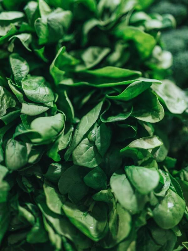 Sveža zelenjava dostava na dom
