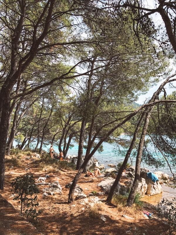 Borovci ob plaži Hvar